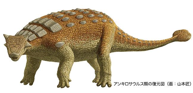 アンキロサウルスの画像 p1_31