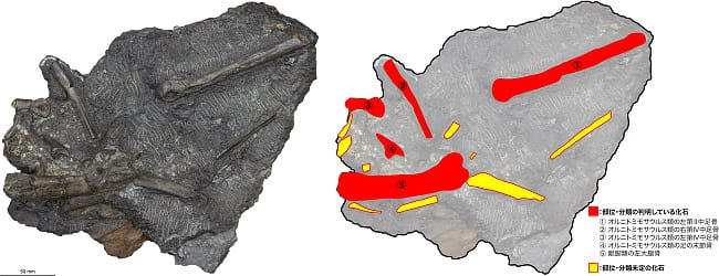 FPDM: 調査研究 - 2018年度 第四次恐竜化石調査成果報告